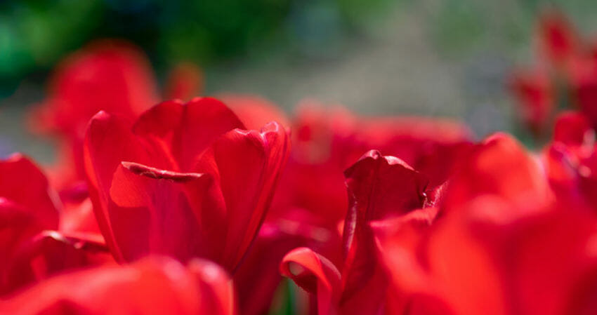 best annuals to plant in Colorado